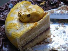 No, that is not an actual Burmese python protecting a chocolate cake. It is the cake. The hyperrealistic cake python was created by North Star Cakes. Plat Halloween, Gross Halloween Foods, Halloween Parties, Creepy Halloween, Halloween Sweets, Cupcakes, Cupcake Cakes, Scary Cakes, Gateau Harry Potter