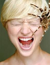 Arachnophobia: The fear of spiders - sufferers experience sweating and shortness of breath when a spider is present, ewwww