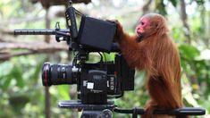 animais que querem ser fotografos (25)