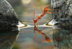Ant. (amazing!)