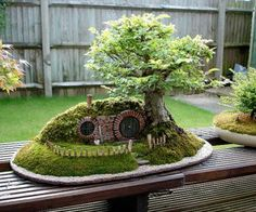 Lord of the Rings Bag End Bonsai.