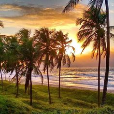 Praia de Japaratinga Alagoas  Ƹ̵̡Ӝ̵̨̄Ʒ • Må®¢ë££å™ • Ƹ̵̡Ӝ̵̨̄Ʒ