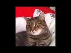 Flower crashes cat► [HD] - YouTube