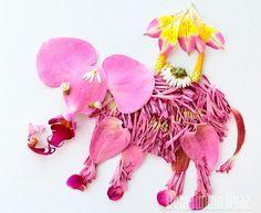 Amazing flower petals pictures