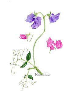 Sweet pea - April birth flower Sweet Pea Tattoo, Botanical Drawings, Botanical Illustration, Botanical Prints, Easy Watercolor, Watercolor Flowers, Watercolour Painting, Flower Tattoo Designs, Flower Tattoos
