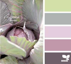 Love the gentle lime green, light gray and a delicious deep grayed purple or purplish gray
