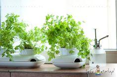 Wazon biały na zioła Herbs & Spices