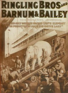 Ringling Bros and Barnum & Bailey, Sacred White Elephant. Lithograph gathered by Karl K. Knecht from the advance advertising cars that toured ahead of circuses in the early 1920s. Pfening Collection. Bandwagon,