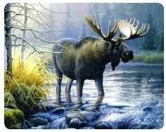 Moose Painting Mousepd