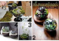 {Oh, So Darling}: Succulent Terrariums