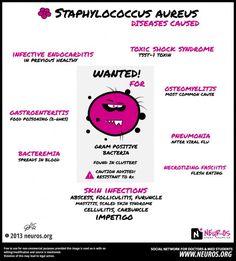 Staph aureus | Neuros- Social Networking For Medical Students