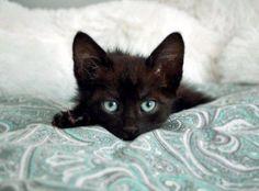 Slumber Pawty Via I Love Kittens And Cats