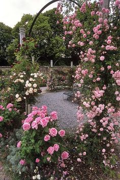 Mottisfont Abbey Rose Garden, Hampshire, England | An awesome rose garden (7of 20) | Pink climbing roses on pergola arch by ukgardenphotos, via Flickr