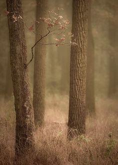 ~ Autumn ~ Silence & Solitude in Somber Hues