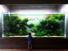 fuck-yeah-aquascaping: Still stunning — ADA designed and maintained gigantic aquascape in Sumida Aquarium, Tokyo. Photo credit: talachi