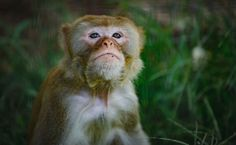 How a Sick, Former Lab Monkey Inspired the Creation of a Sanctuary for Others Like Her