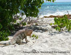 Friends of st vincent island