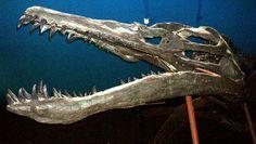 Liopleurodon ferox (20m/30m)