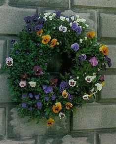 How to:  Plant a (Pansy) Living Wreath