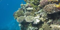 Coral Reef Pictures, Herbs, Herb, Medicinal Plants