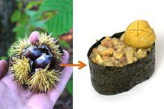 Ich liebe Esskastanien! Ich sammel sie gerne selbst im Wald und esse sie noch lieber. Aber als Sushi? Auch das geht! Gunkanmaki Sushi mit zweierlei Esskastanien, ein Traum :)