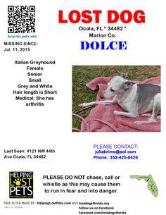 Lost Dog - Italian Greyhound - Ocala, FL, United States