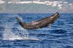 Sperm whale calf