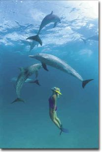Swim with dolphins in the wild