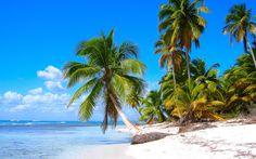 tropical - Full HD Wallpaper, Photo