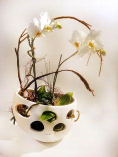 Ein ausgefallene Geschenkidee  #Valentino #Pflanzung #Orchidee #Phalaenopsis #Floristik #floralart