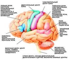 Тренируем мозг с помощью физических упражнений!