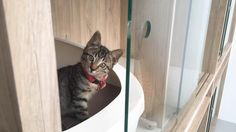 Unlike most mixed pet boarding facilities, the newly-opened Nekoya Cat Hotel in Singapore is feline-only.That's because its unique apartment-style set up is meant to provide a zen space for stressed out cats, co-founder Debrah Lau said.To suit cats' needs, the boarding capsules consist of cool and wa