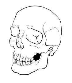 Pix For > How To Draw A Realistic Skull Step By Step   Art ...