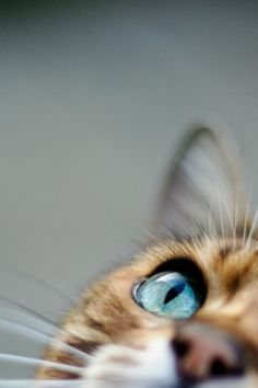 I don't know why I love photos of cat eyes so much. But I do.