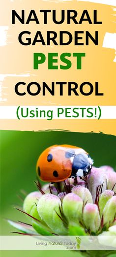 Looking for natural ways to keep pests out of your garden? How about using certain pests to do the job! Learn how to use pest predators for pest control in your garden here. #naturalgardenpestcontrol Garden Insects, Garden Pests, Organic Gardening Tips, Organic Farming, Insect Species, Green Living Tips, Insect Pest, Easy Garden, Garden Tips