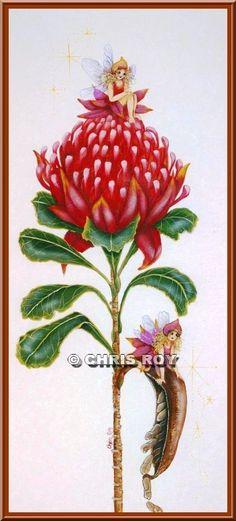 waratah - Google Search Australian Flowers, Google Search