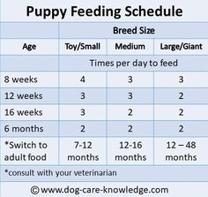 How To Deal With Aggressive Dog Behavior Problems - Dog Health Care and Information Puppy Feeding Schedule, Puppy Schedule, Puppy Feeding Guide, New Puppy Checklist, Puppy Training Tips, Training Your Dog, Potty Training, Toilet Training, Training Collar