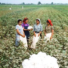 «Affaire du coton» ou quand l'or blanc a ébranlé l'économie soviétique | Actualités russes