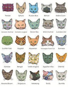 Achados da internet: ilustrações mostram diferentes raças de gatos <3