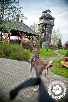 Zegrze - Klepisko Wood Watch, Dogs, Animals, Wooden Clock, Animales, Animaux, Pet Dogs, Doggies, Animal