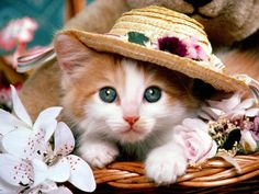 Cute Cat Download Wallpapers And Free Desktop Backgrounds  Top 1366×768 Cute Cat Pictures Wallpapers (37 Wallpapers) | Adorable Wallpapers