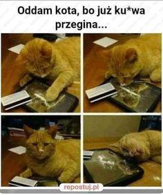 Memes Ridículos, Silly Memes, Cat Memes, Jokes, Wtf Funny, Funny Cute, Hilarious, Animal Memes, Funny Animals