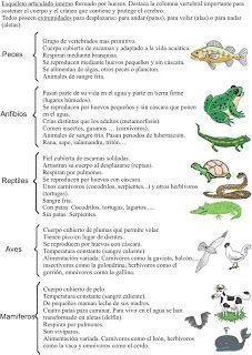 Esquema animales vertebrados