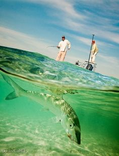 Bonefish...They will take you into the backing