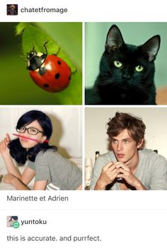 We found the perfect actors for a live action movie! We found the perfect actors for a live action movie! Ladybug Comics, Miraclous Ladybug, Live Action Movie, Action Movies, Miraculous Ladybug Memes, Kids Shows, Indie Movies, Comedy Movies, Geek Stuff