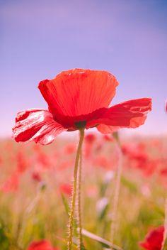 poppy by leviatan-666