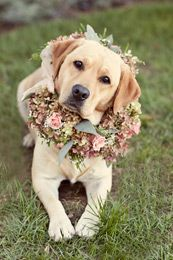 What a cute ring bearer :) If I can train my dog to be the ring bearer, I will do this when I get married:)