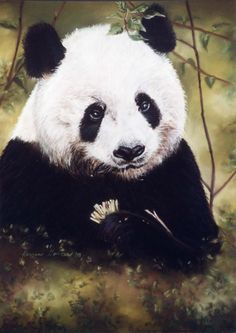 Panda Bear pastel pet portrait.  Reproductions avail.  see www.karrenmgarces.com
