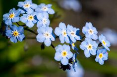 Small Flowers by Alan Price on 500px