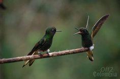 Fauna+Colombia   Fauna en Colombia - Animales Mamíferos Aves Reptiles Colombia